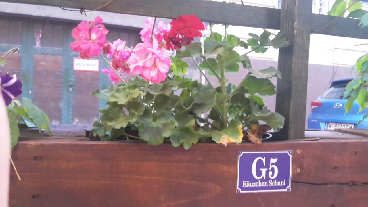 Blumen, Käuzchen, Wien